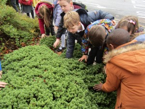 greenschool and senses walk 001