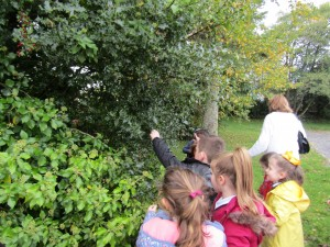 greenschool and senses walk 003