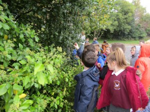 greenschool and senses walk 004
